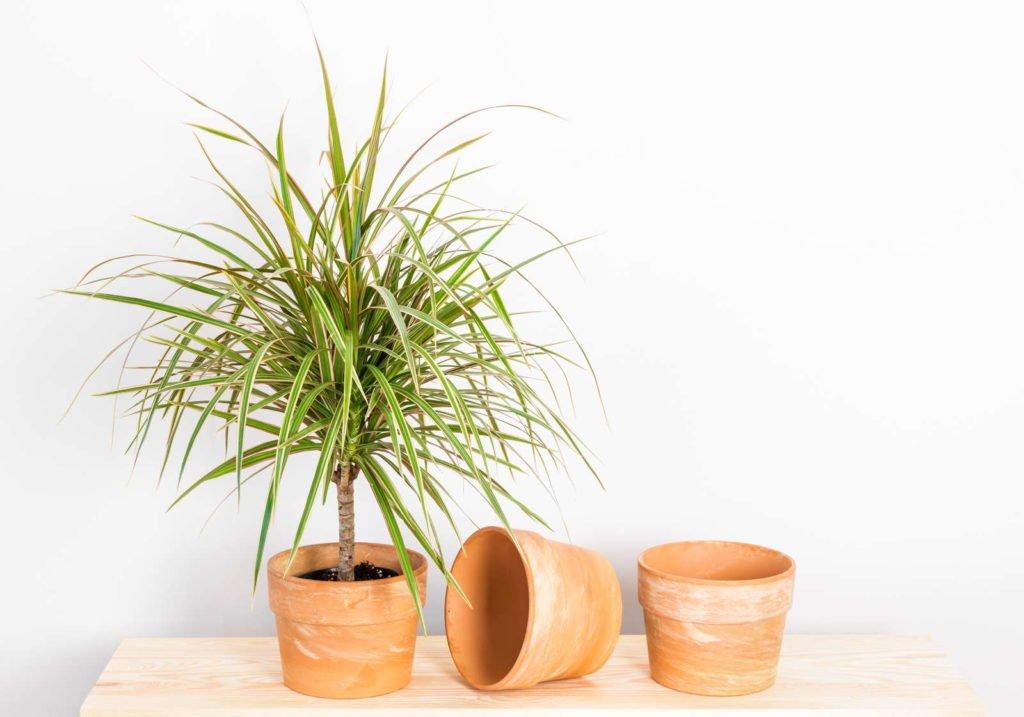 Indoor Plants 2, Best Garden, Home And DIY Tips