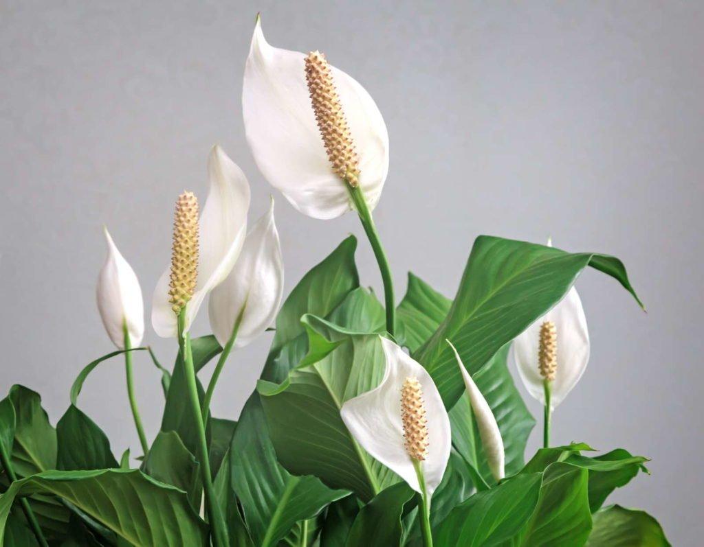 Indoor Plants 4, Best Garden, Home And DIY Tips