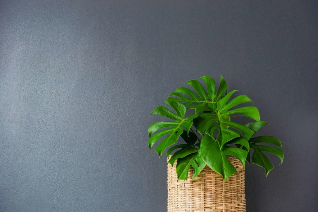 Indoor Plants 5, Best Garden, Home And DIY Tips