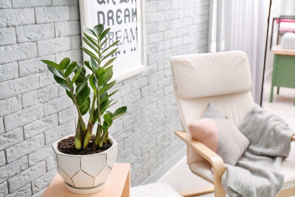 Indoor Plants 6, Best Garden, Home And DIY Tips