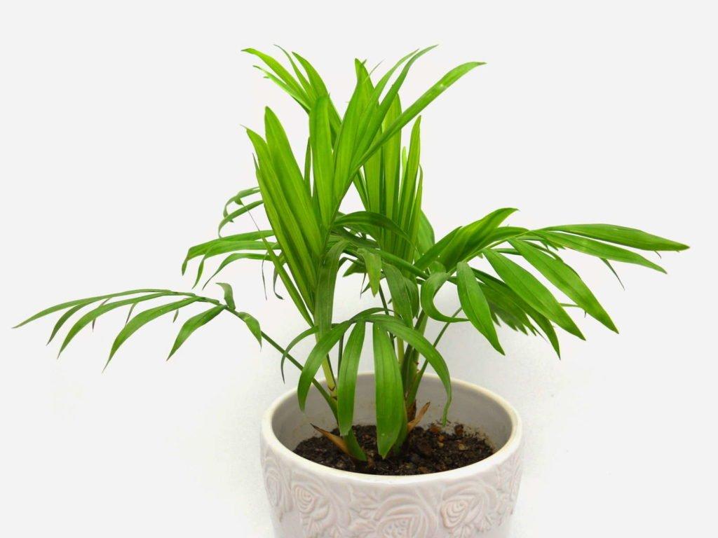 Indoor Plants 7, Best Garden, Home And DIY Tips