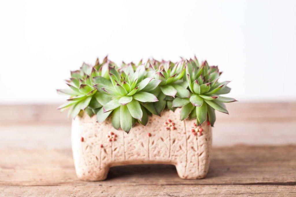 Indoor Plants 9, Best Garden, Home And DIY Tips