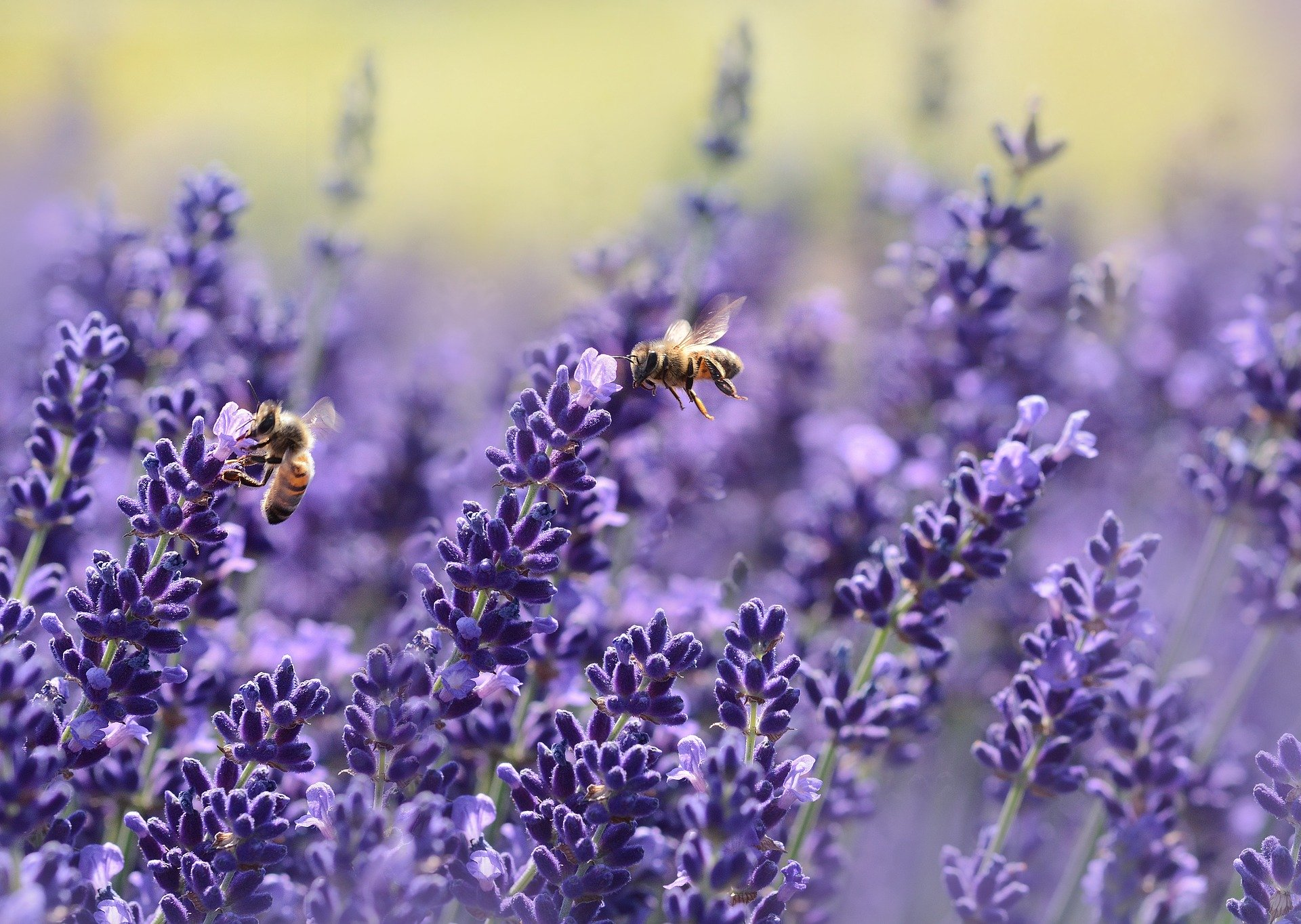 , Which plants do bees dislike?, Best Garden, Home And DIY Tips