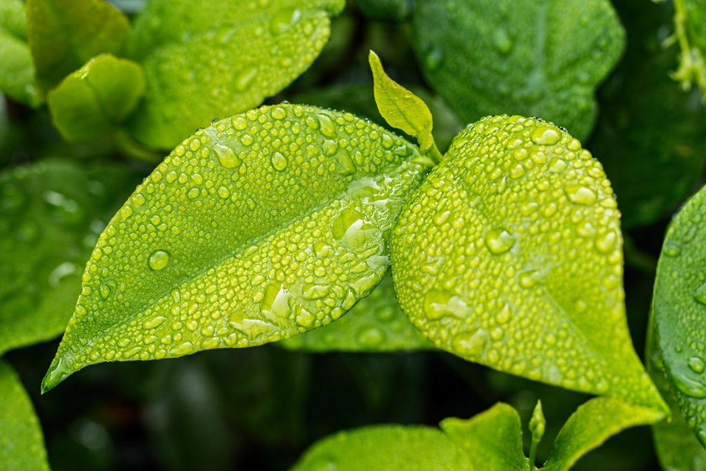Leaf 1001679 1920 1 1024x683, Best Garden, Home And DIY Tips