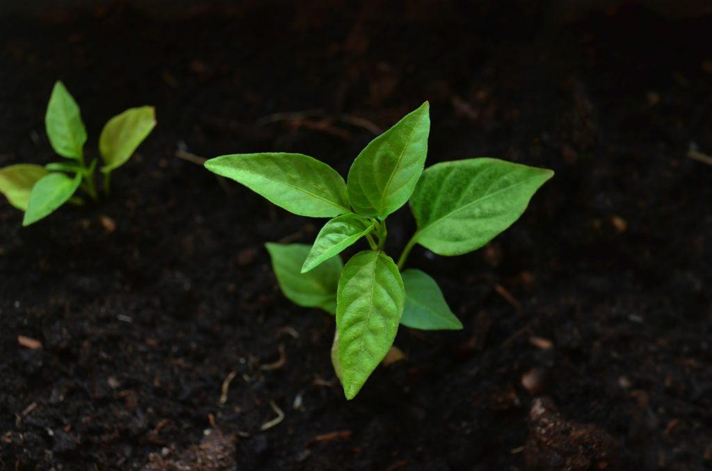 Leaf 2797173 1920 1024x678, Best Garden, Home And DIY Tips