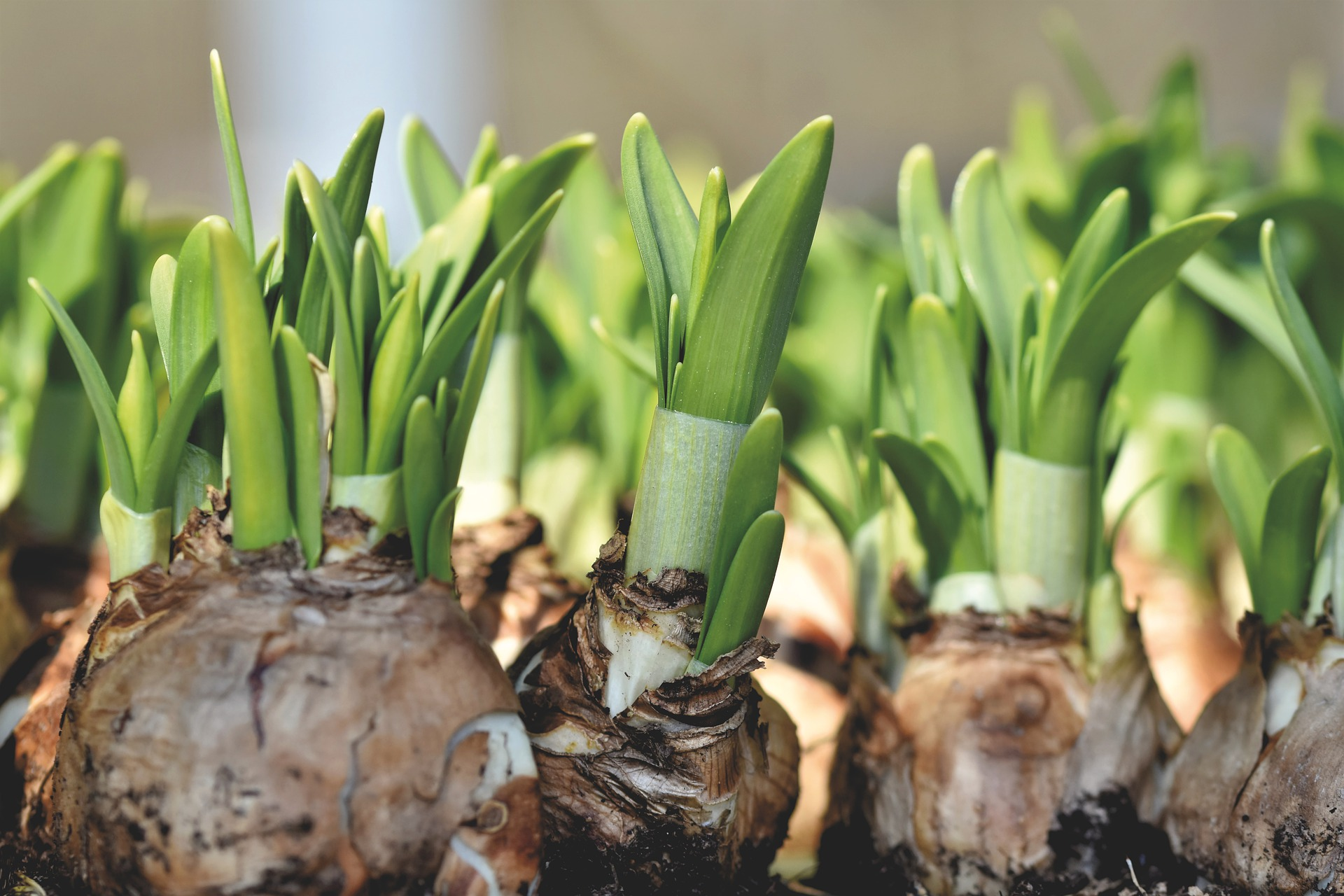 , Plant bulbs for spring – Very important to note!, Best Garden, Home And DIY Tips