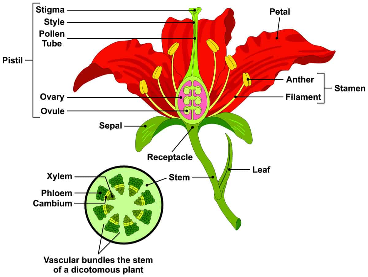 , Plant Anatomy, Best Garden, Home And DIY Tips