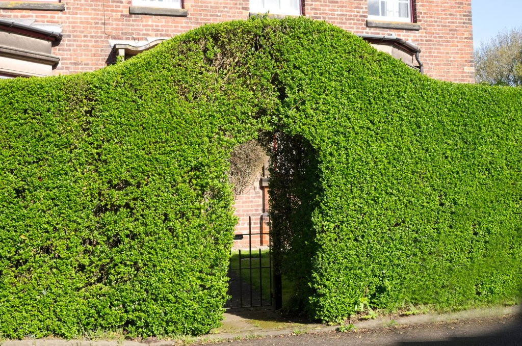 Privacy Protection 1, Best Garden, Home And DIY Tips