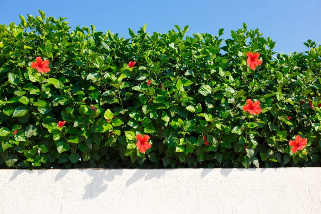 Privacy Protection 12, Best Garden, Home And DIY Tips