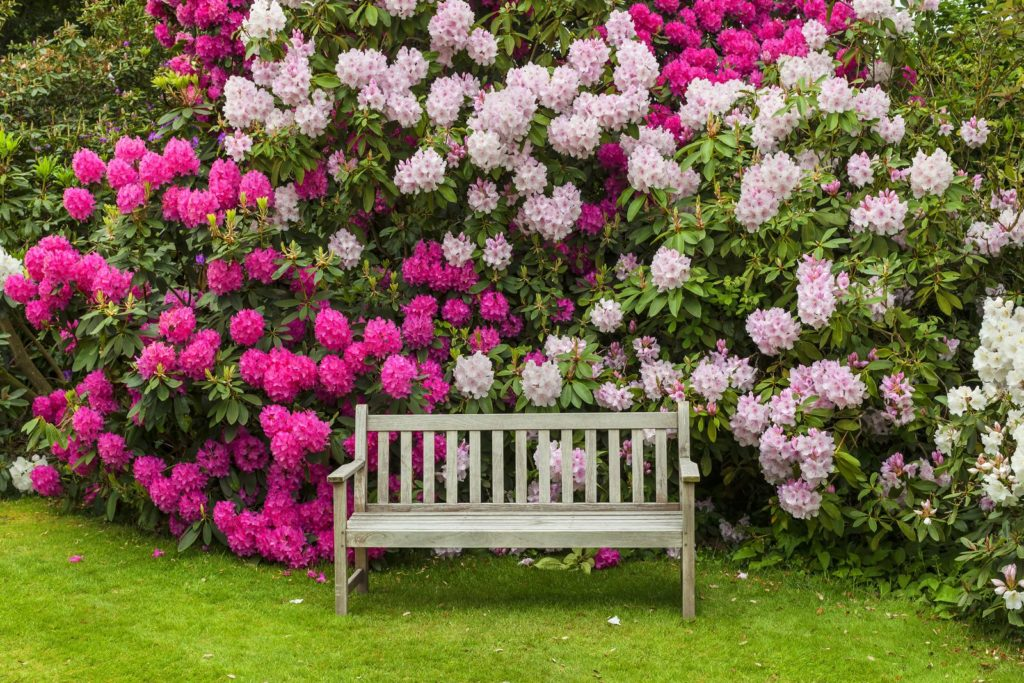 Privacy Protection 3, Best Garden, Home And DIY Tips
