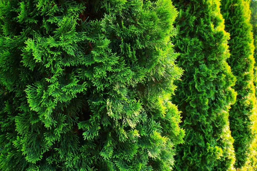 Privacy Protection 4, Best Garden, Home And DIY Tips