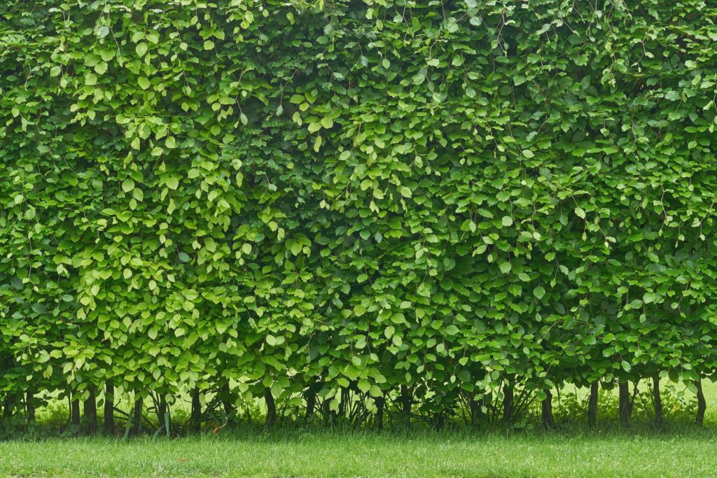 Privacy Protection 6, Best Garden, Home And DIY Tips