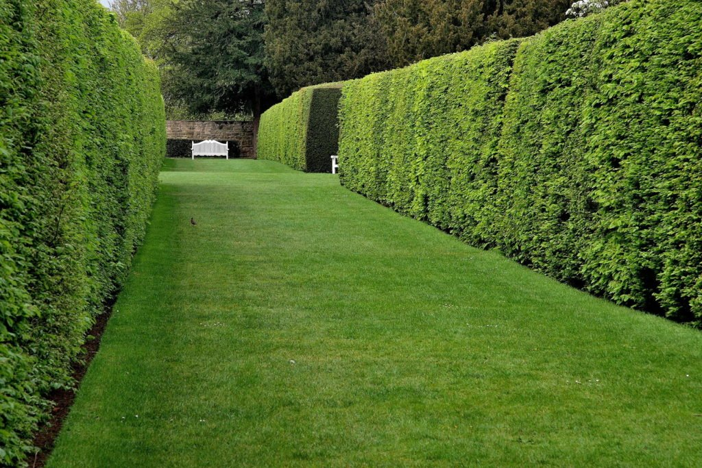Privacy Protection 7, Best Garden, Home And DIY Tips