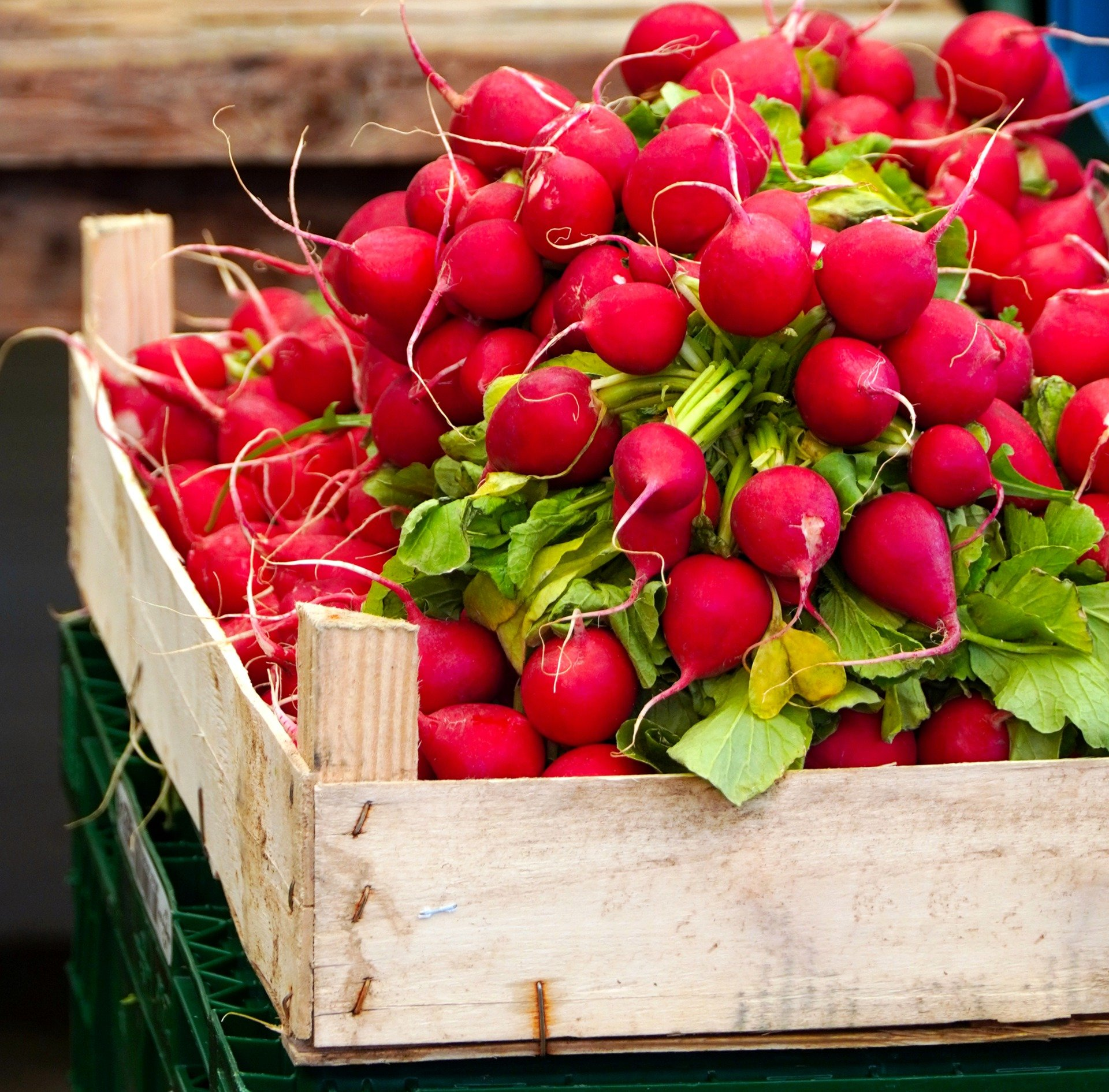 , Start the vegetable season with radishes, Best Garden, Home And DIY Tips