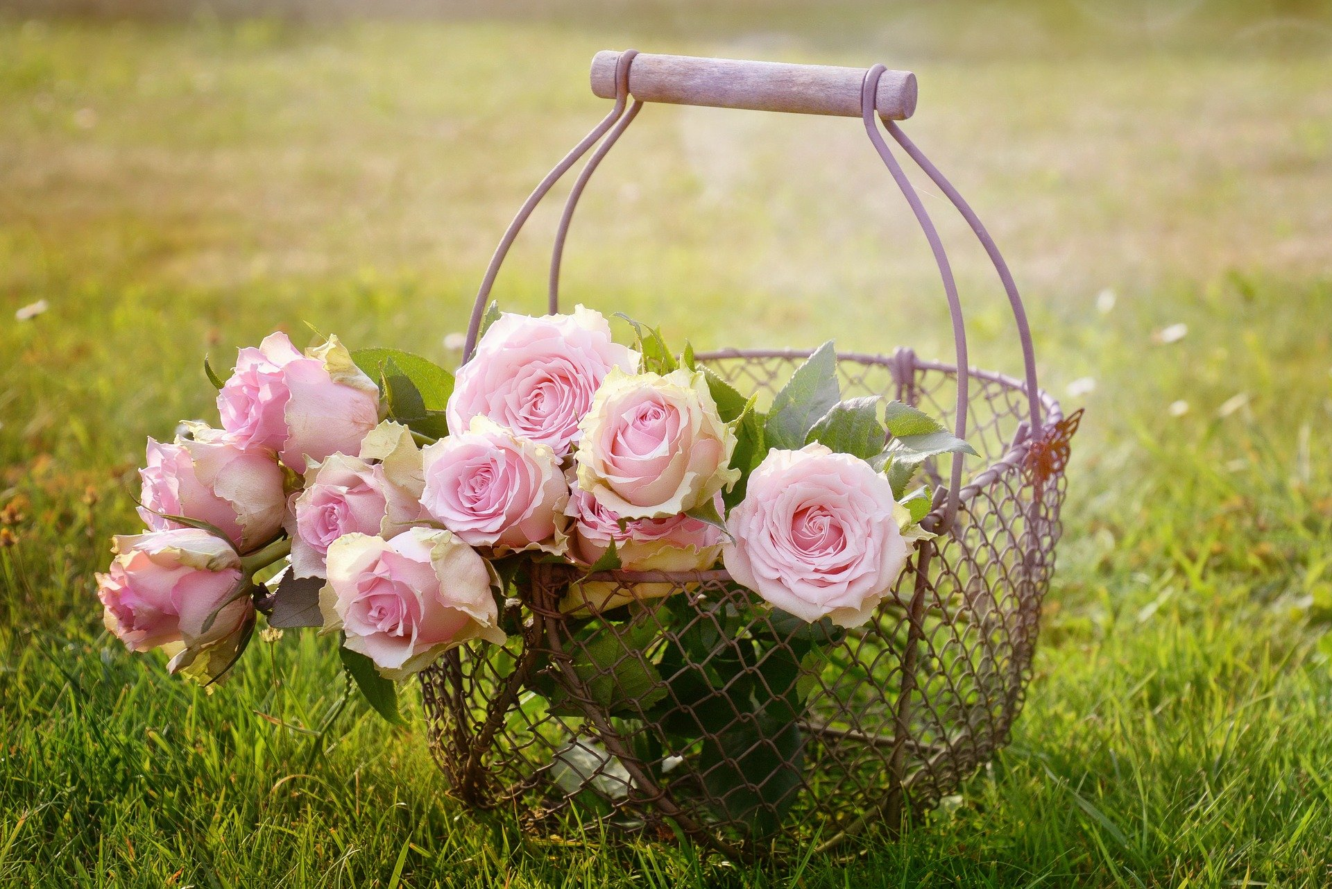 , The most beautiful rose garden – All infos about roses, Best Garden, Home And DIY Tips