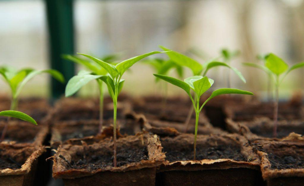 Seedling 5009286 1920 1024x627, Best Garden, Home And DIY Tips