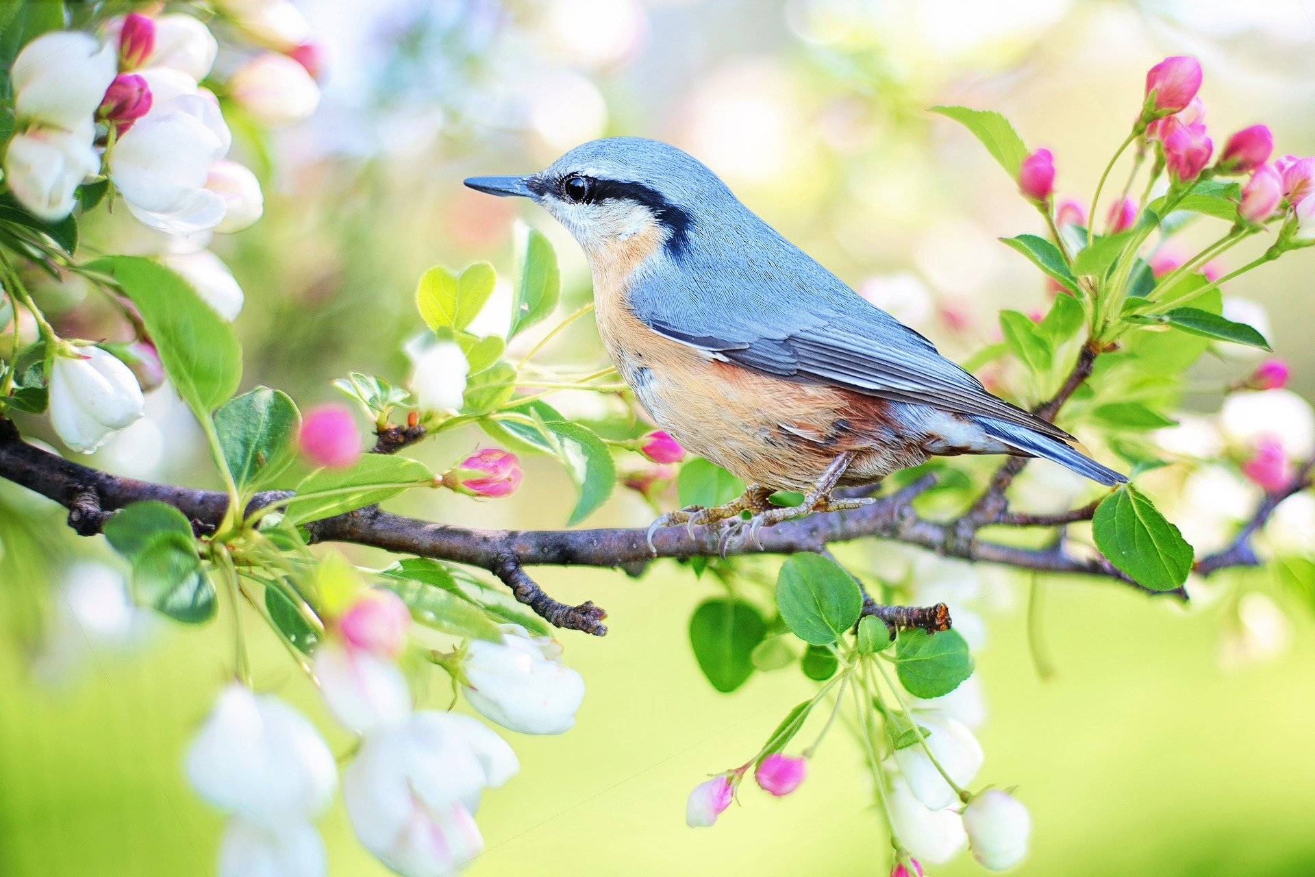 Read more about the article The gardening work in the first spring