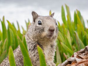 , Attracting squirrels: The 5 best tips for settling the squirrels in your own garden, Best Garden, Home And DIY Tips
