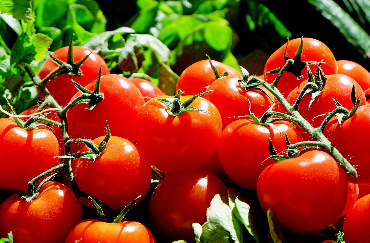 , 10 tips for the perfect tomato from your own garden, Best Garden, Home And DIY Tips
