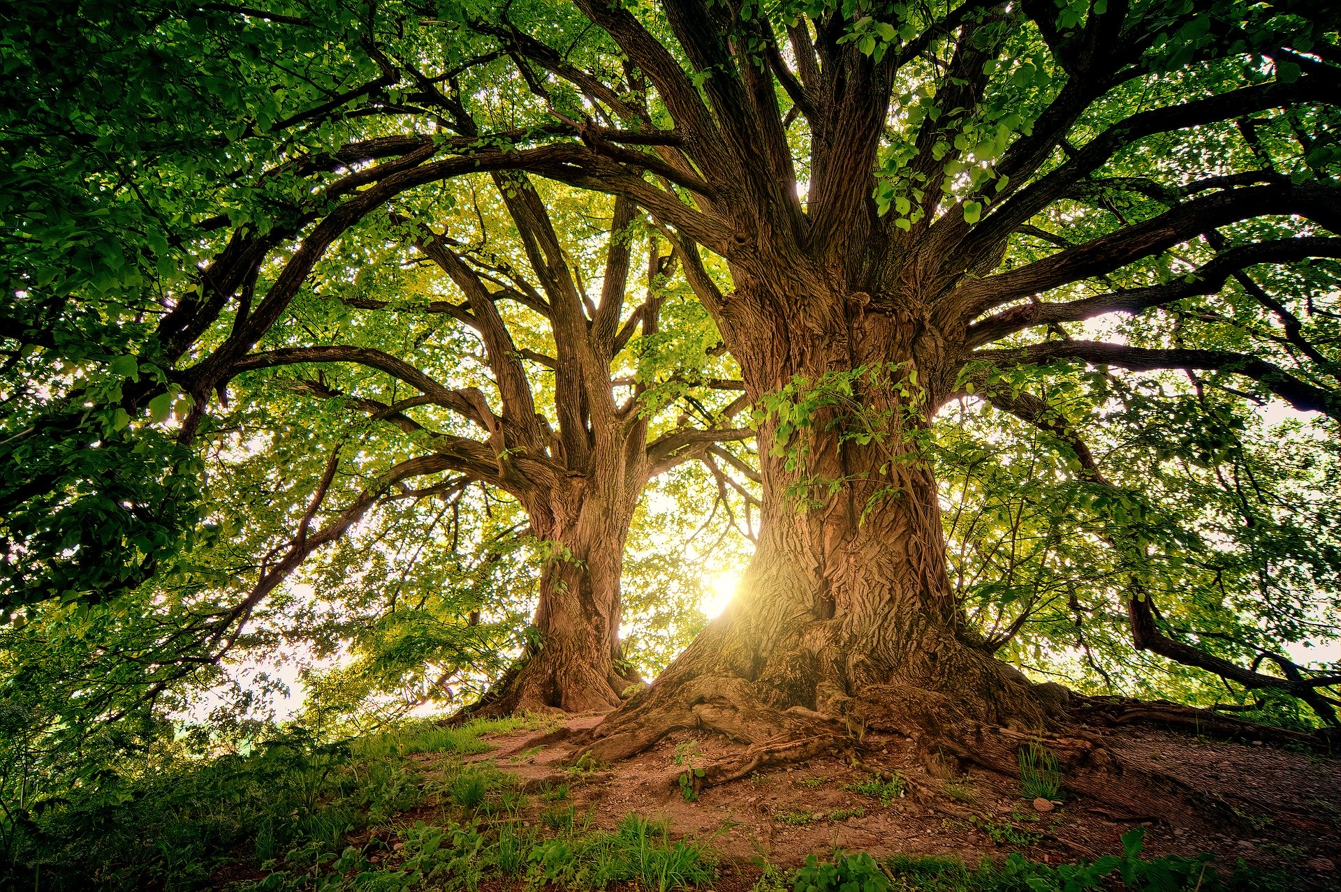 , Can trees communicate with each other?, Best Garden, Home And DIY Tips