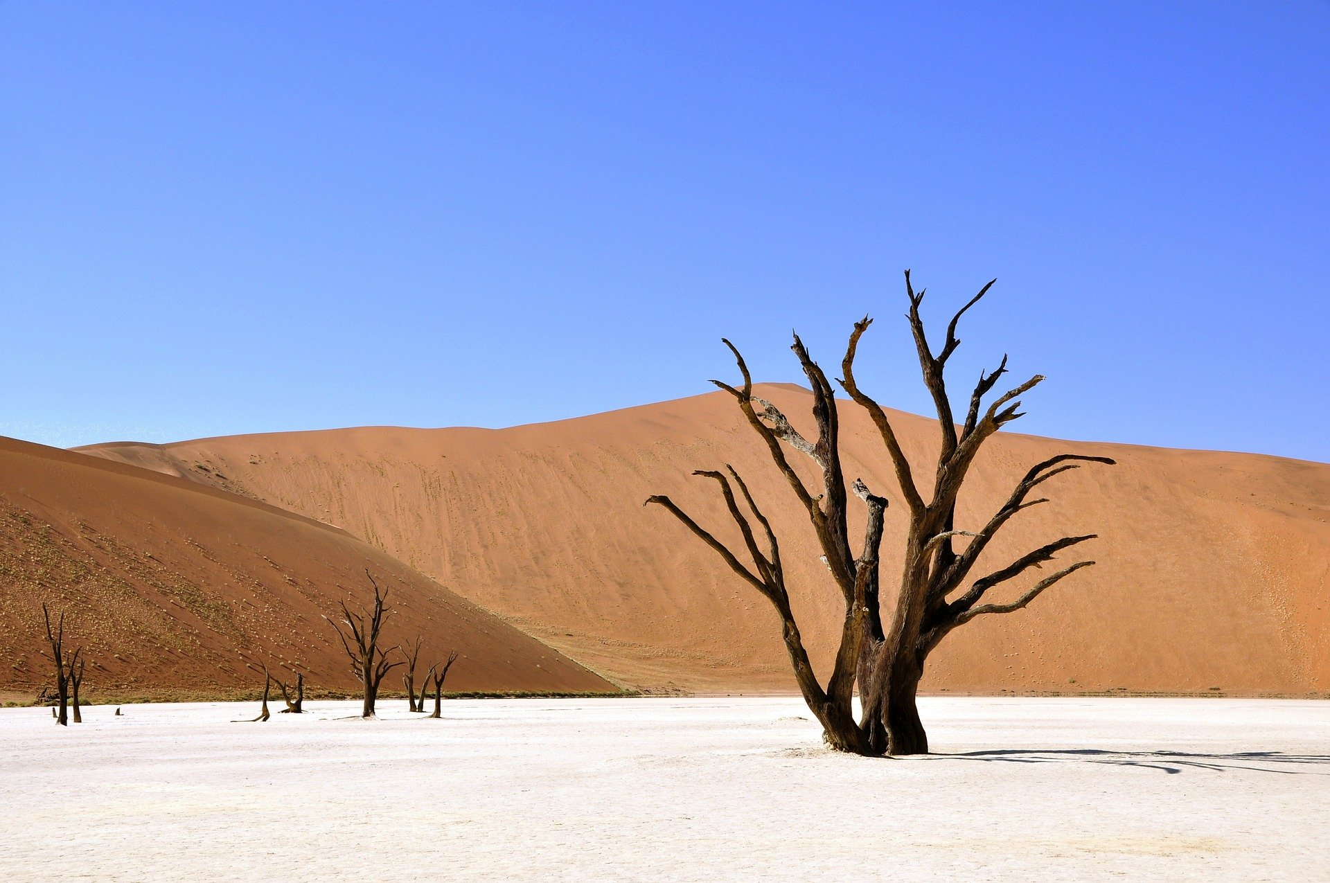 , That is why a drought is fatal for the soil, Best Garden, Home And DIY Tips