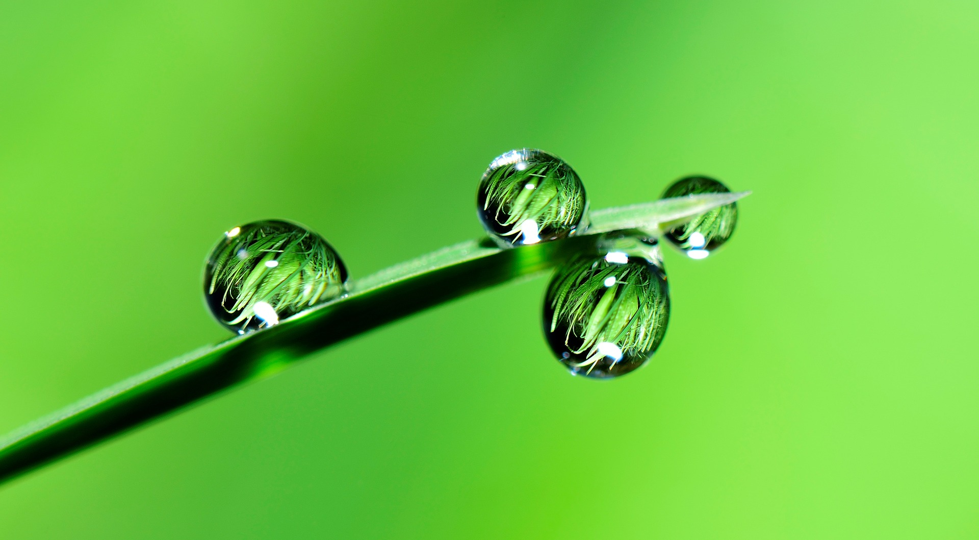 , Water for plants – that's how important it is, Best Garden, Home And DIY Tips