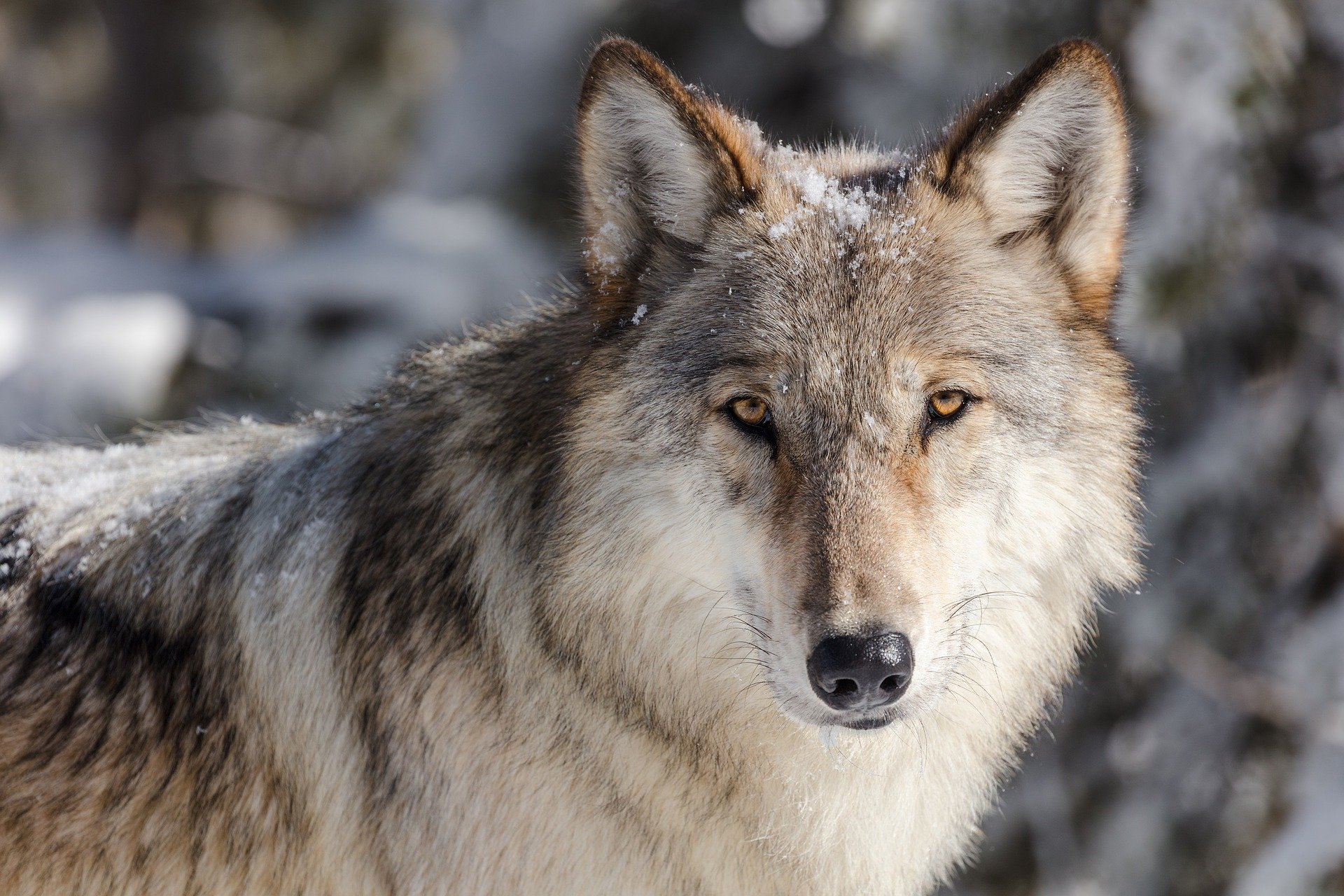 , The wolf can do that for the forest, Best Garden, Home And DIY Tips