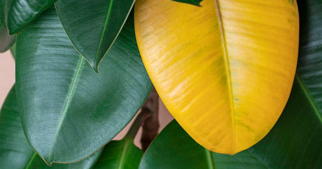 Yellow Leaf 1024x538, Best Garden, Home And DIY Tips