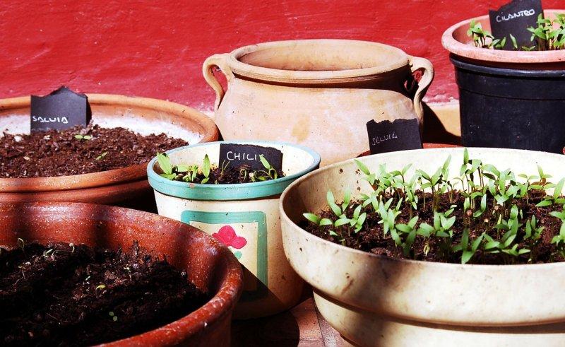 Balcony Garden 2, Best Garden, Home And DIY Tips