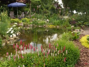 , DIY Backyard Garden Pond, Best Garden, Home And DIY Tips