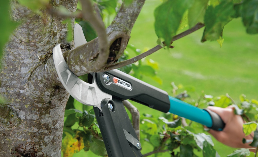How To Cut Apple Tree, Best Garden, Home And DIY Tips