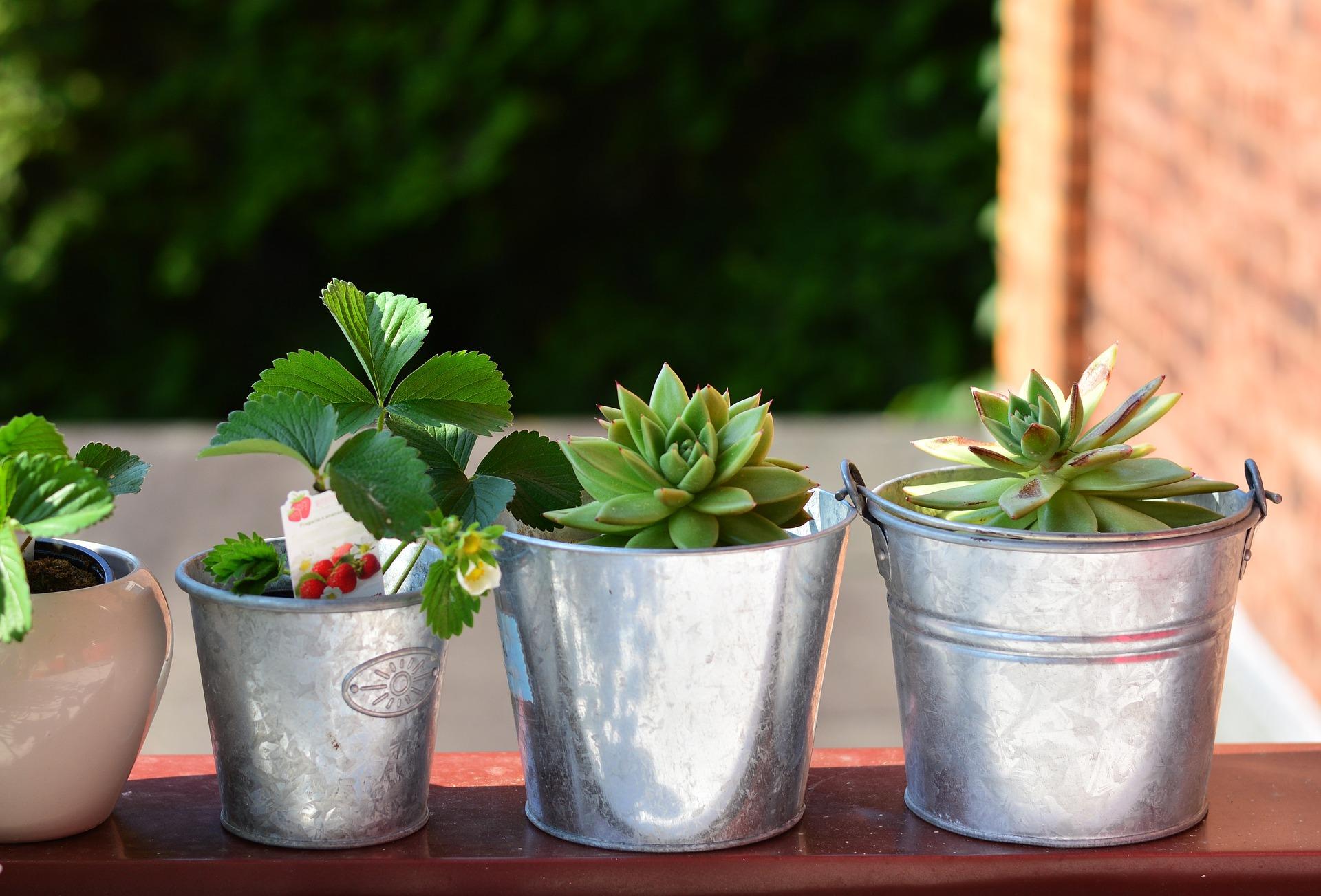 Plant encyclopedia for the balcony garden