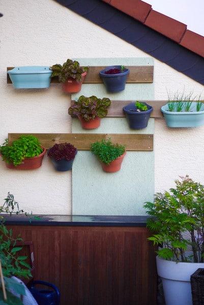 Balcony Plants, Best Garden, Home And DIY Tips
