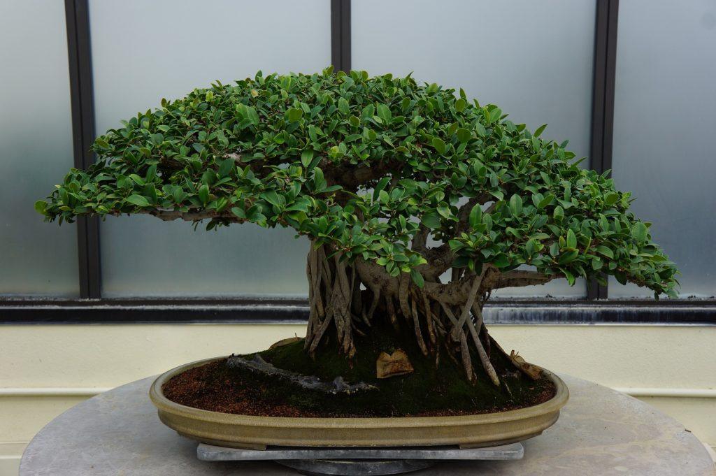 Bonsai 1024x681, Best Garden, Home And DIY Tips