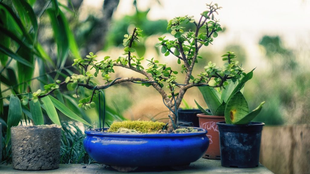 Bonsai Tree Watering 1024x576, Best Garden, Home And DIY Tips