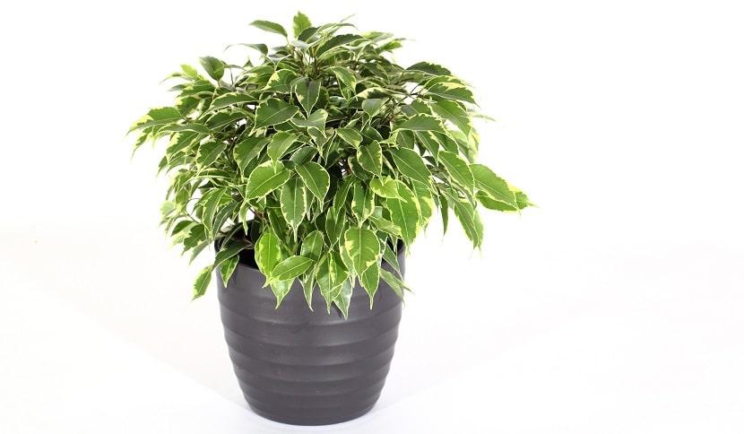 Cleanair 10, Best Garden, Home And DIY Tips