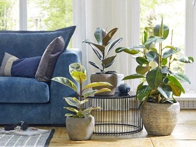 Cleanair 11, Best Garden, Home And DIY Tips