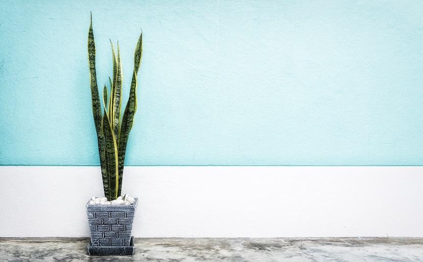 Cleanair 4, Best Garden, Home And DIY Tips