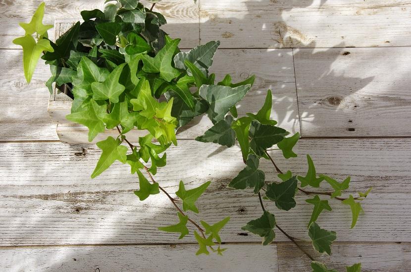 Cleanair 5, Best Garden, Home And DIY Tips
