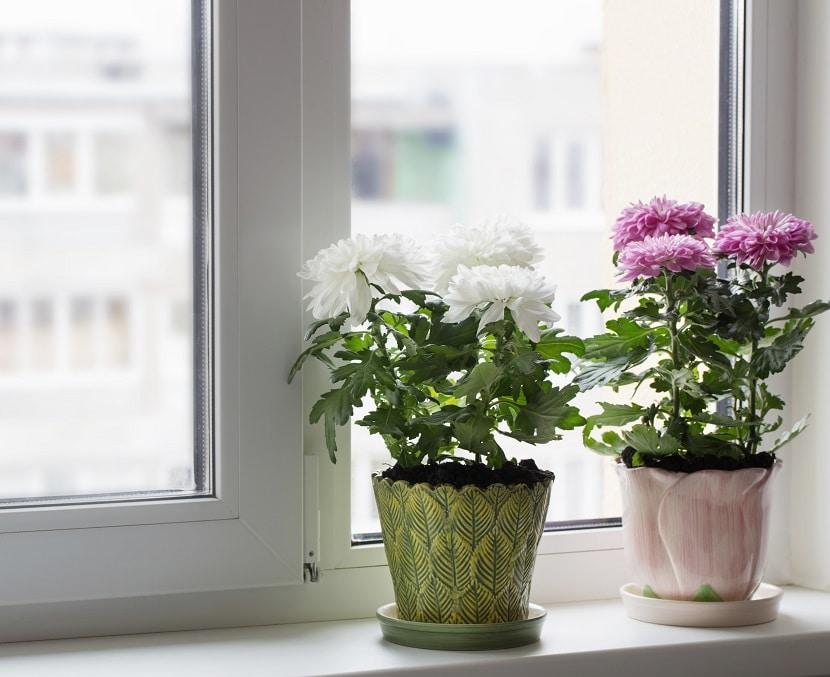 Cleanair 6, Best Garden, Home And DIY Tips