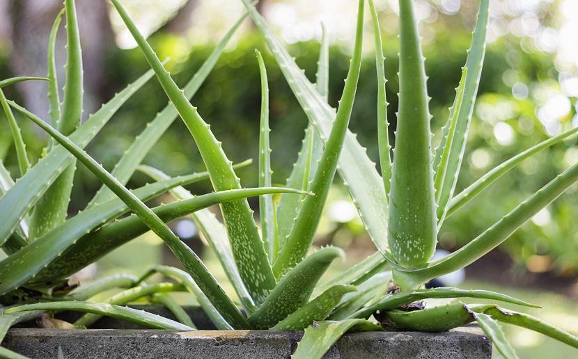 Cleanair 8, Best Garden, Home And DIY Tips