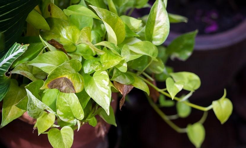 Cleanair 9, Best Garden, Home And DIY Tips