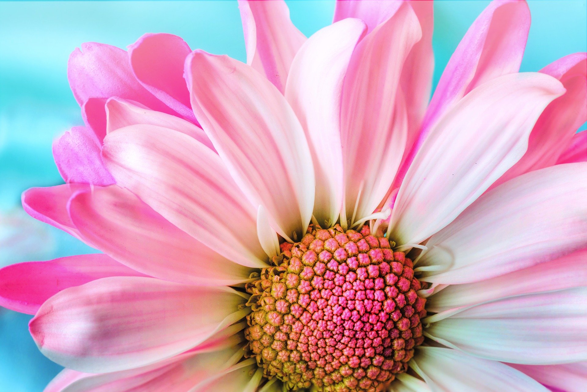 , Flowers With Meaning, Best Garden, Home And DIY Tips