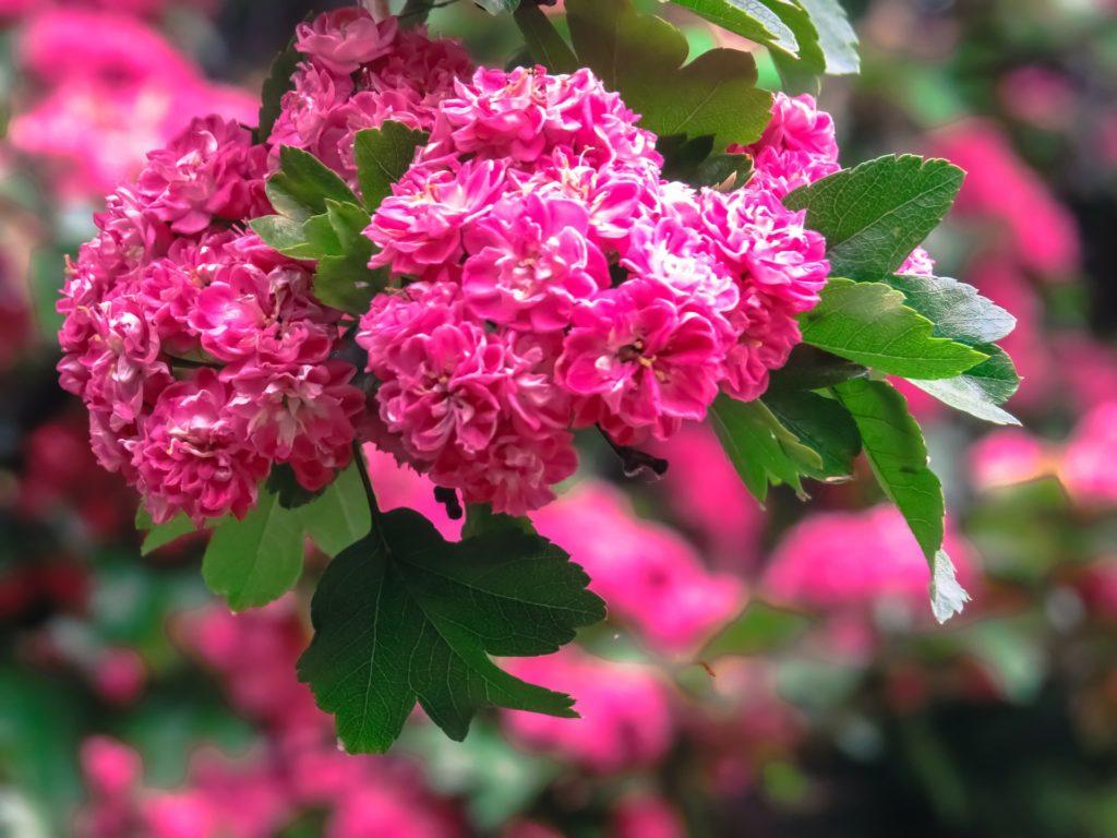 Flowers 181223 1920 1024x768, Best Garden, Home And DIY Tips