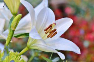 , The gardening work in full spring, Best Garden, Home And DIY Tips