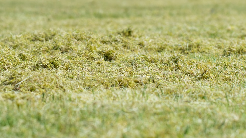 , How can you remove moss in the lawn without scarifying?, Best Garden, Home And DIY Tips