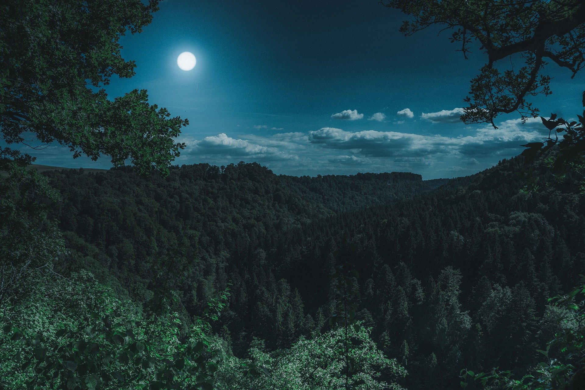 , Can moonlight affect plant growth?, Best Garden, Home And DIY Tips