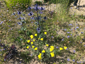 , Plants that grow on sand – without fertilizer, without watering, Best Garden, Home And DIY Tips