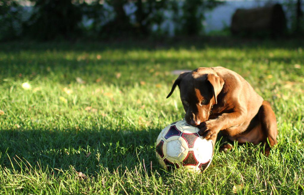Puppy 2022351 1920 1024x658, Best Garden, Home And DIY Tips