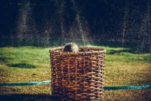 , The Best Backyard Summer Activities, Best Garden, Home And DIY Tips